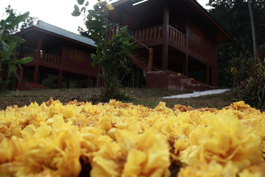 living in a thai monastery - the housing