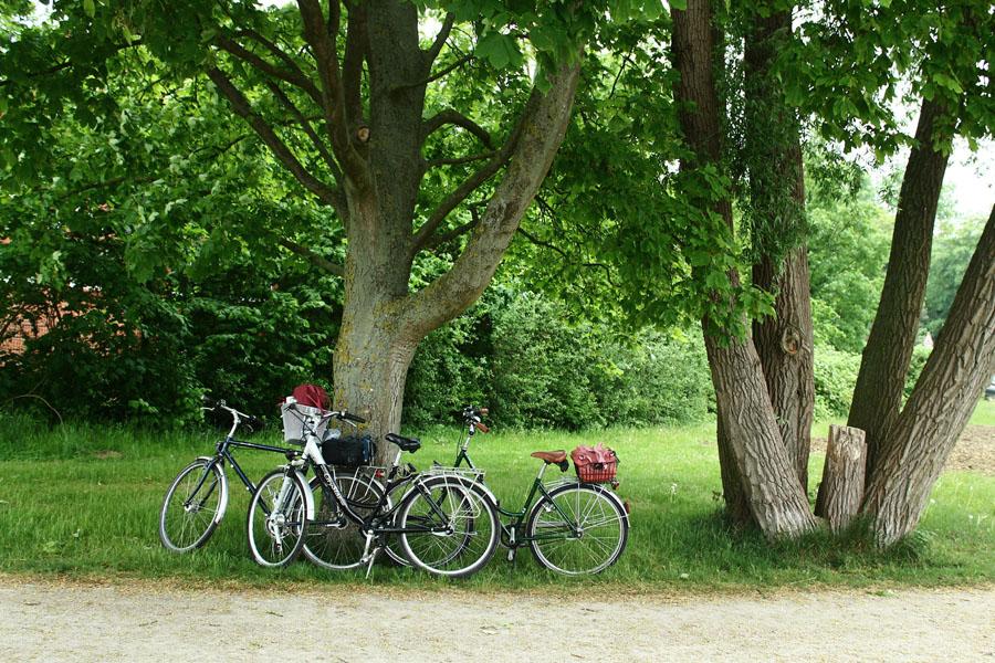 Escape by taking a bike tour.