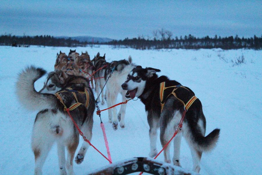exploring swedish lapland
