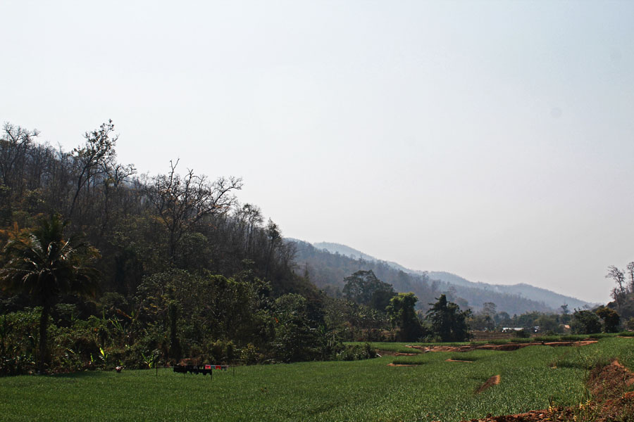 A ricefield in Pai, a city along the Mae Hong Son Loop.