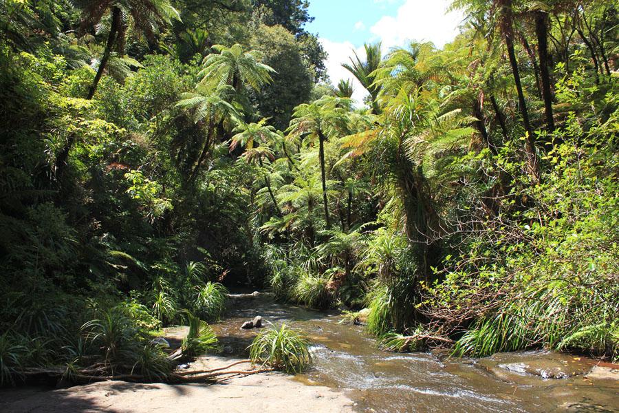 Fairy Fall of New Zealand's North Island.