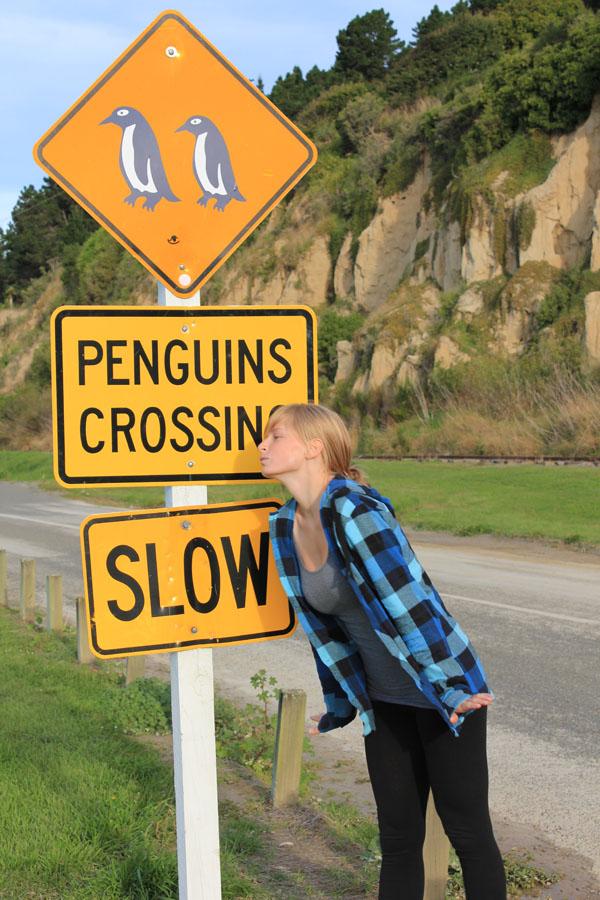 Penguins Crossing in New Zealand