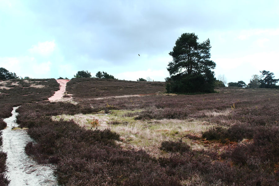 Just outside of Hamburg: the colorful Heide