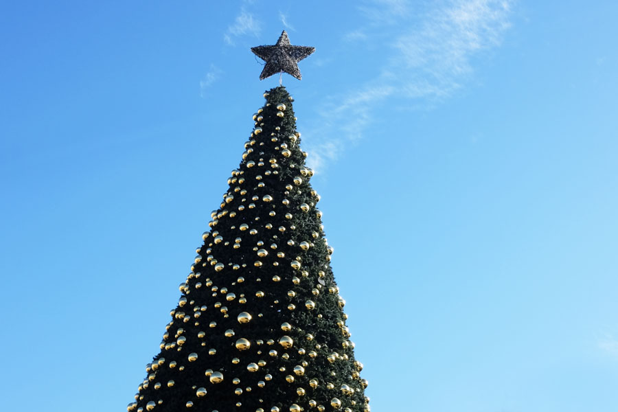 Christmas Tree on Manger Square in Bethlehem