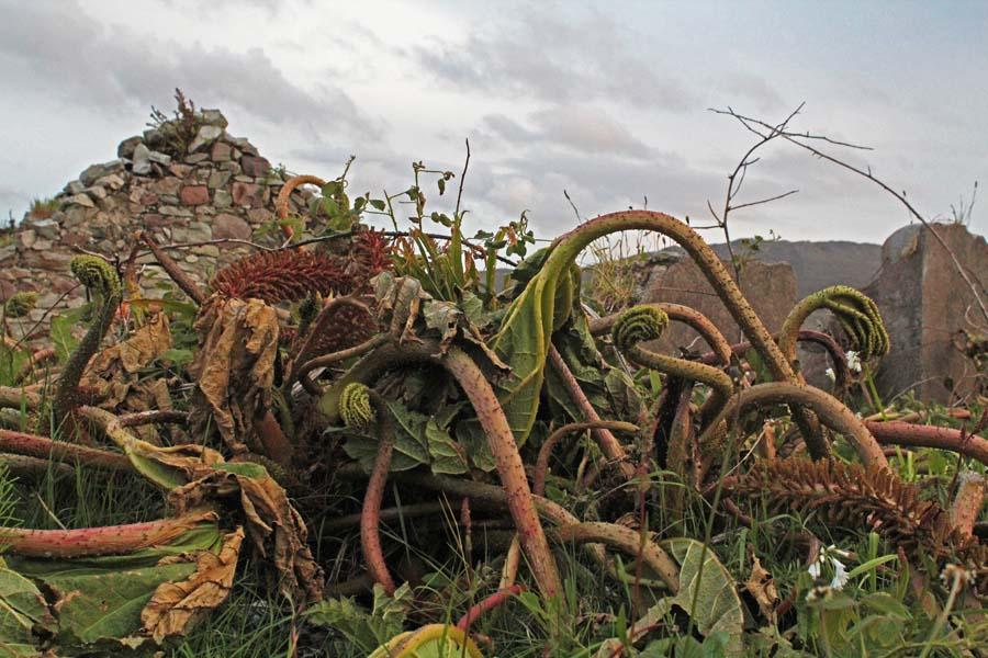 A bit of wilderness on Achill Island.