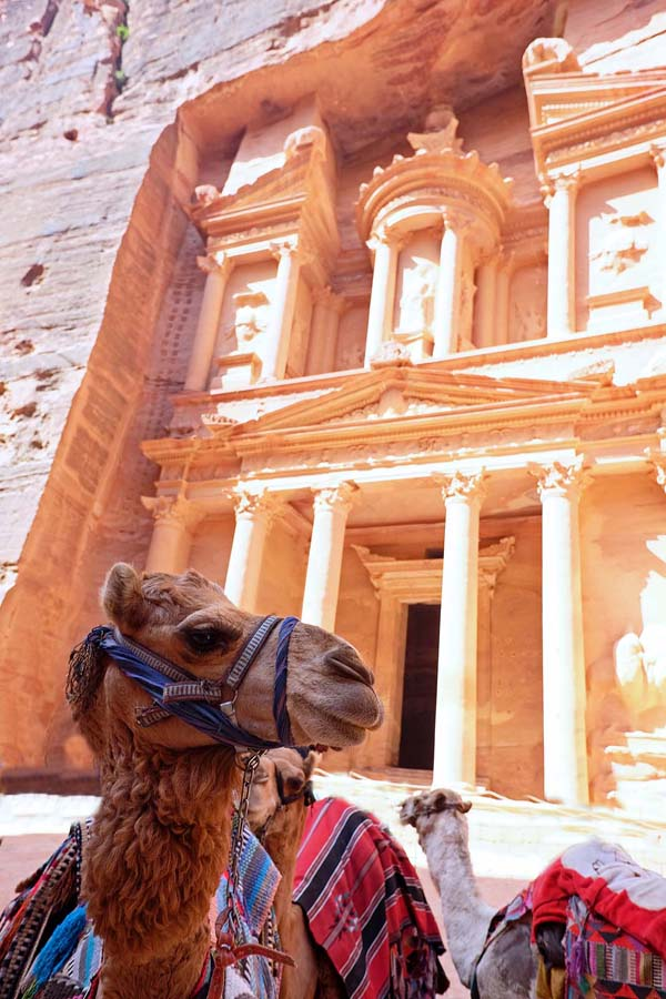 Camel in front of Petra's Treasury