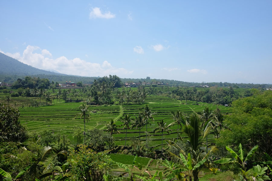 rice fields in jatiluwih