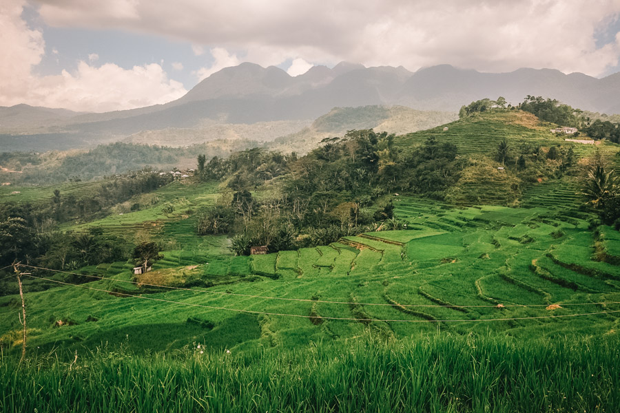view over the ricefields around Ruteng